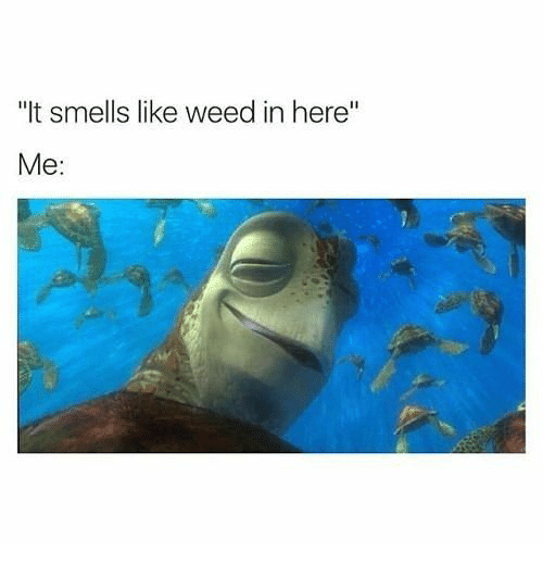 """Weed, Like, and Here: """"It smells like weed in here""""  Me:"""