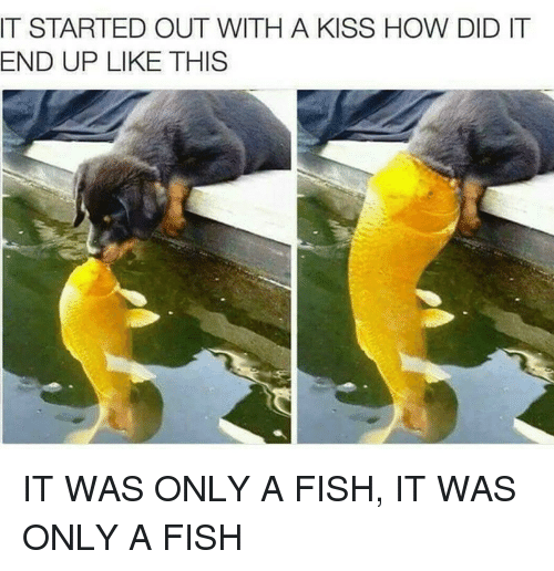 It Started Out With A Kiss: IT STARTED OUT WITH A KISS HOW DID IT  END UP LIKE THIS IT WAS ONLY A FISH, IT WAS ONLY A FISH
