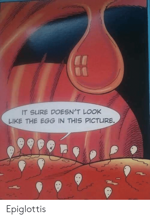 Picture, Look, and This: IT SURE DOESN'T LOOK  LIKE THE EGG IN THIS PICTURE Epiglottis