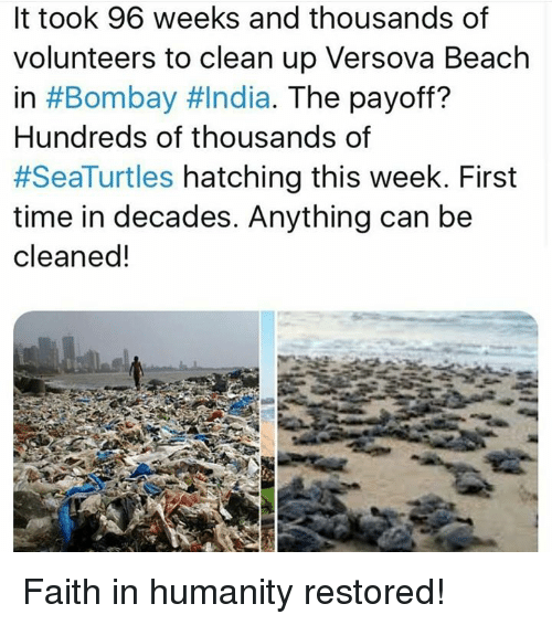 faith in humanity restored: It took 96 weeks and thousands of  volunteers to clean up Versova Beach  in #Bombay #India. The payoff?  Hundreds of thousands of  #SeaTurtles hatching this week. First  time in decades. Anything can be  cleaned! Faith in humanity restored!