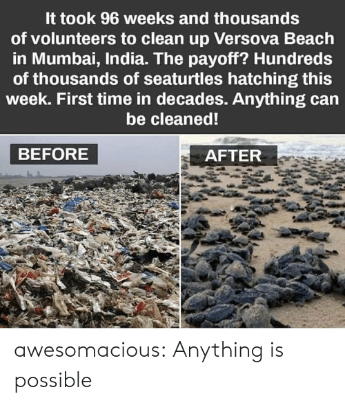 Tumblr, Beach, and Blog: It took 96 weeks and thousands  of volunteers to clean up Versova Beach  in Mumbai, India. The payoff? Hundreds  of thousands of seaturtles hatching this  week. First time in decades. Anything can  be cleaned!  BEFORE  AFTER awesomacious:  Anything is possible