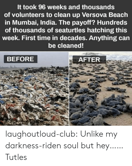 Club, Tumblr, and Beach: It took 96 weeks and thousands  of volunteers to clean up Versova Beach  in Mumbai, India. The payoff? Hundreds  of thousands of seaturtles hatching this  week. First time in decades. Anything can  be cleaned!  BEFORE  AFTER laughoutloud-club:  Unlike my darkness-riden soul but hey……Tutles
