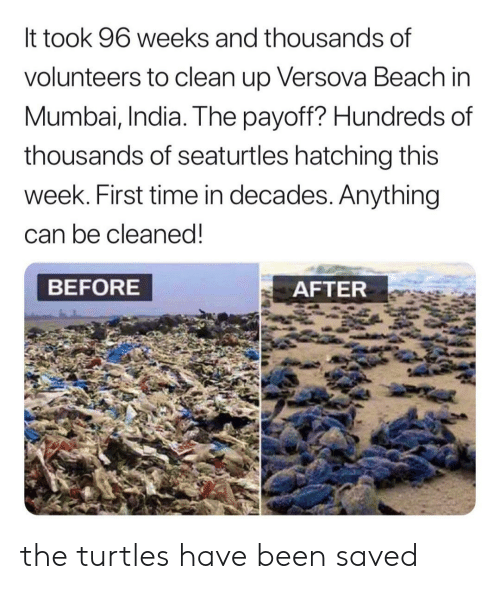 Beach, India, and Time: It took 96 weeks and thousands of  volunteers to clean up Versova Beach in  Mumbai, India. The payoff? Hundreds of  thousands of seaturtles hatching this  week. First time in decades. Anything  can be cleaned!  BEFORE  AFTER the turtles have been saved