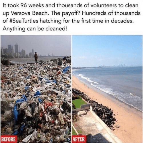 before after: It took 96 weeks and thousands of volunteers to clean  up Versova Beach. The payoff? Hundreds of thousands  of #SeaTurtles hatching for the first time in decades.  Anything can be cleaned!  BEFORE  AFTER