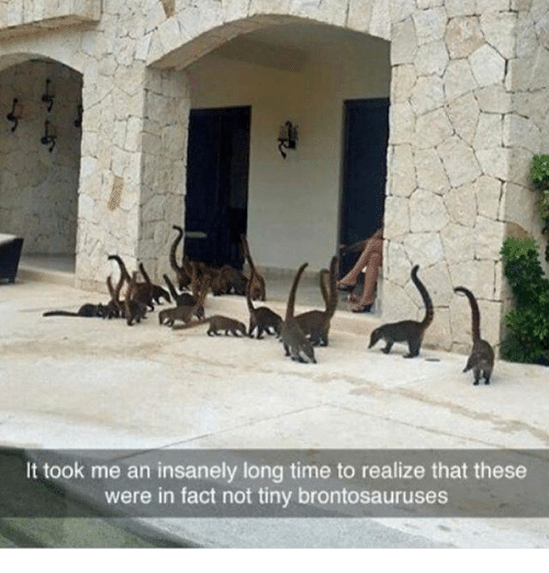 brontosaurus: It took me an insanely long time to realize that these  were in fact not tiny brontosauruses