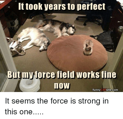 Memes, Work, and Strong: It took years to perfect  Butmyprce field works fine  now  funny  CAT  site.com It seems the force is strong in this one.....