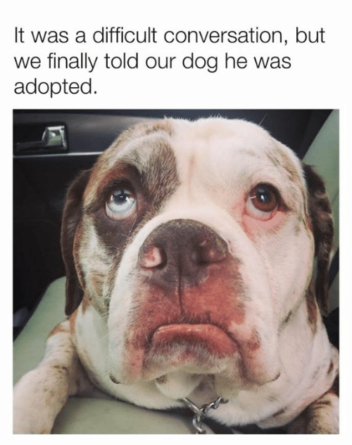 Dank, 🤖, and Dog: It was a difficult conversation, but  we finally told our dog he was  adopted