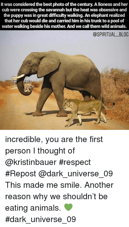 obsessive: it was considered the best photo of the century. A lioness and her  cub were crossing the savannah but the heat was obsessive and  the puppy was in great difficulty walking. An elephant realized  that her cub would die and carried him in his trunk to a pool of  water walking beside his mother. And we call them wild animals.  aSPIRITUAL BLOG incredible, you are the first person I thought of @kristinbauer #respect #Repost @dark_universe_09 ・・・ This made me smile. Another reason why we shouldn't be eating animals. 💚  #dark_universe_09
