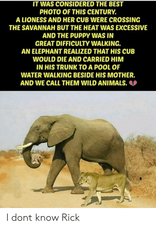 Animals, Best, and Elephant: IT WAS CONSIDERED THE BEST  PHOTO OF THIS CENTURY.  A LIONESS AND HER CUB WERE CROSSING  THE SAVANNAH BUT THE HEAT WAS EXCESSIVE  AND THE PUPPY WAS IN  GREAT DIFFICULTY WALKING.  AN ELEPHANT REALIZED THAT HIS CUB  WOULD DIE AND CARRIED HIM  IN HIS TRUNK TO A POOL OF  WATER WALKING BESIDE HIS MOTHER  AND WE CALL THEM WILD ANIMALS.  et I dont know Rick