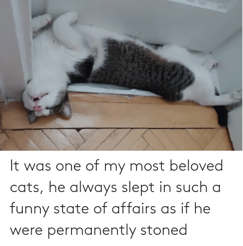 state of affairs: It was one of my most beloved cats, he always slept in such a funny state of affairs as if he were permanently stoned