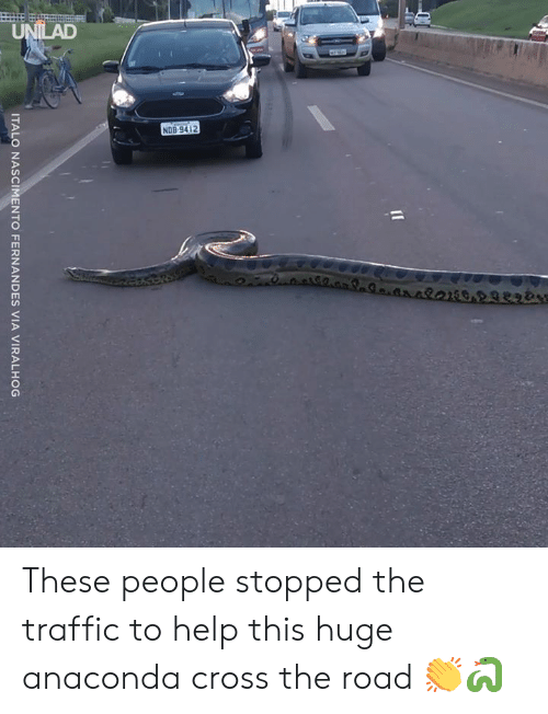 Anaconda, Dank, and Traffic: ITALO NASCIMENTO FERNANDES VIA VIRALHOG These people stopped the traffic to help this huge anaconda cross the road 👏🐍