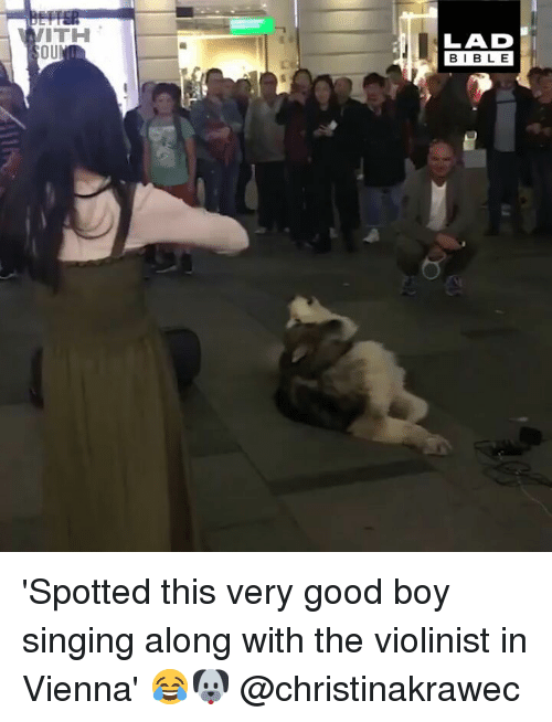 Memes, Singing, and Bible: ITH  OU  LAD  BIBLE 'Spotted this very good boy singing along with the violinist in Vienna' 😂🐶 @christinakrawec
