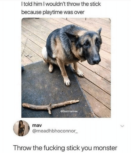 Playtime: Itold him I wouldn't throw the stick  because playtime was over  Bestmemes  mav  @meadhbhoconnor  Throw the fucking stick you monster
