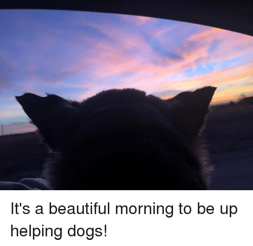 Helping Dog: It's a beautiful morning to be up helping dogs!