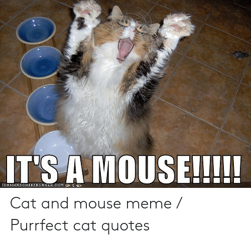 Jerry The Mouse: IT'S A MOUSE!!!!  ICANHASCHEEZEURGEK, COM Cat and mouse meme / Purrfect cat quotes