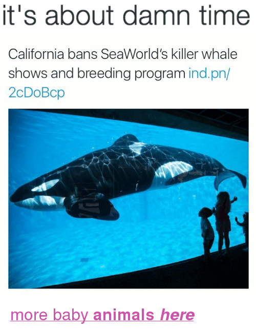 "Animals, Target, and Tumblr: it's about damn time   California bans SeaWorld's killer whale  shows and breeding program ind.pn/  2cDoBcp <p><a href=""http://babyanimalgifs.tumblr.com/"" target=""_blank"">more baby <b>animals <i>here</i></b></a></p>"