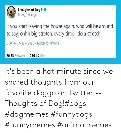 Dog: It's been a hot minute since we shared thoughts from our favorite doggo on Twitter -- Thoughts of Dog!#dogs #dogmemes #funnydogs #funnymemes #animalmemes