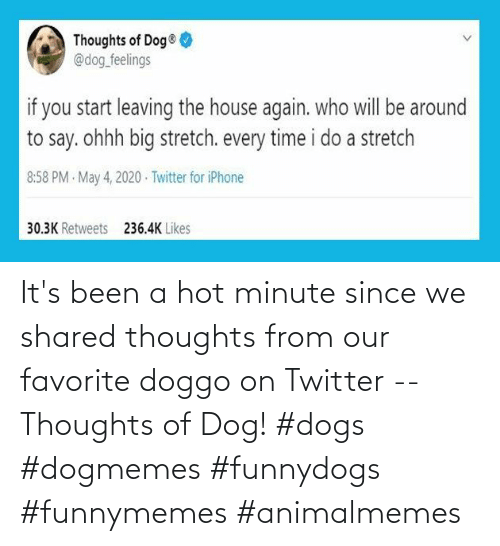 thoughts: It's been a hot minute since we shared thoughts from our favorite doggo on Twitter -- Thoughts of Dog! #dogs #dogmemes #funnydogs #funnymemes #animalmemes