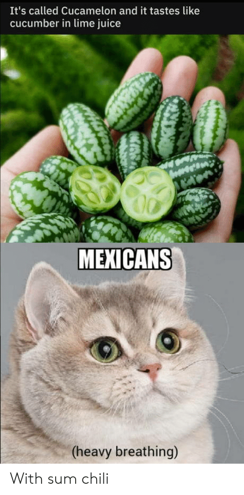 Tastes Like: It's called Cucamelon and it tastes like  cucumber in lime juice  MEXICANS  (heavy breathing) With sum chili