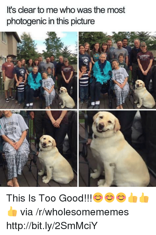 Good, Http, and Who: It's clear to me who was the most  photogenic in this picture This Is Too Good!!!😊😊😊👍👍👍 via /r/wholesomememes http://bit.ly/2SmMciY