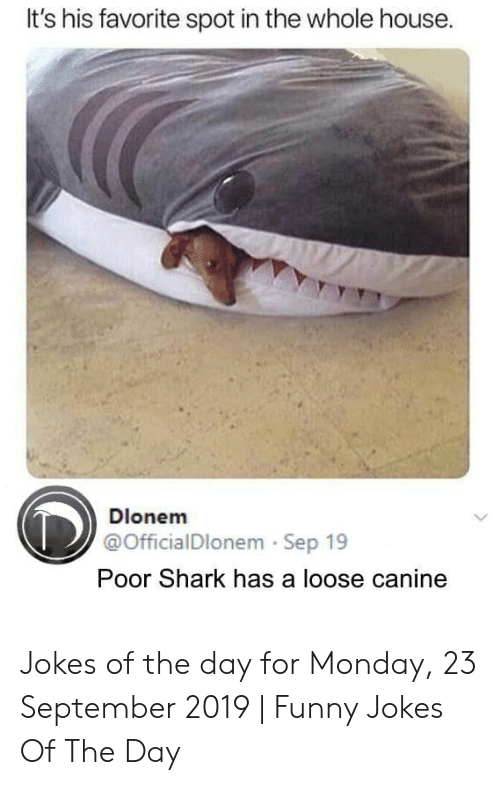 canine: It's his favorite spot in the whole house.  Dlonem  @OfficialDlonem Sep 19  Poor Shark has a loose canine Jokes of the day for Monday, 23 September 2019 | Funny Jokes Of The Day