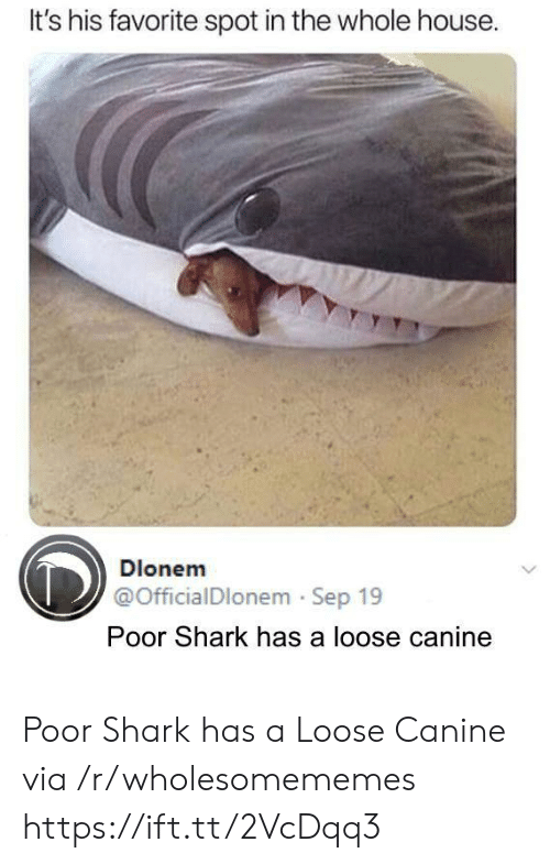 canine: It's his favorite spot in the whole house  Dlonem  @OfficialDlonem Sep 19  Poor Shark has a loose canine Poor Shark has a Loose Canine via /r/wholesomememes https://ift.tt/2VcDqq3