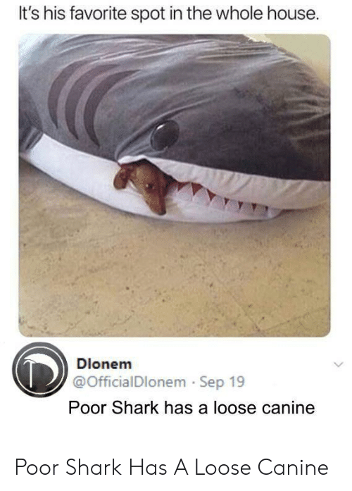 canine: It's his favorite spot in the whole house  Dlonem  @OfficialDlonem Sep 19  Poor Shark has a loose canine Poor Shark Has A Loose Canine