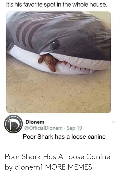 canine: It's his favorite spot in the whole house  Dlonem  @OfficialDlonem Sep 19  Poor Shark has a loose canine Poor Shark Has A Loose Canine by dlonem1 MORE MEMES