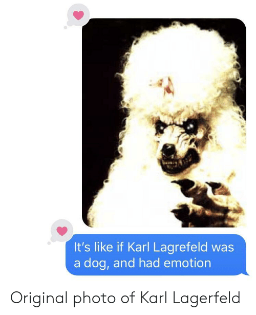 Toosoon, Dog, and Karl Lagerfeld: It's like if Karl Lagrefeld was  a dog, and had emotion Original photo of Karl Lagerfeld