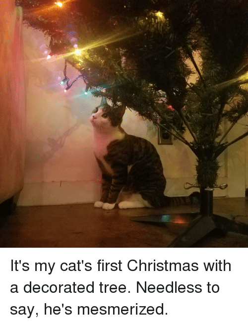 Cats, Christmas, and Tree: It's my cat's first Christmas with a decorated tree. Needless to say, he's mesmerized.
