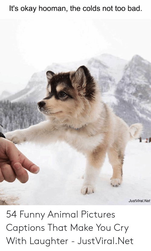 funny animal: It's okay hooman, the colds not too bad.  JustViral.Net 54 Funny Animal Pictures Captions That Make You Cry With Laughter - JustViral.Net