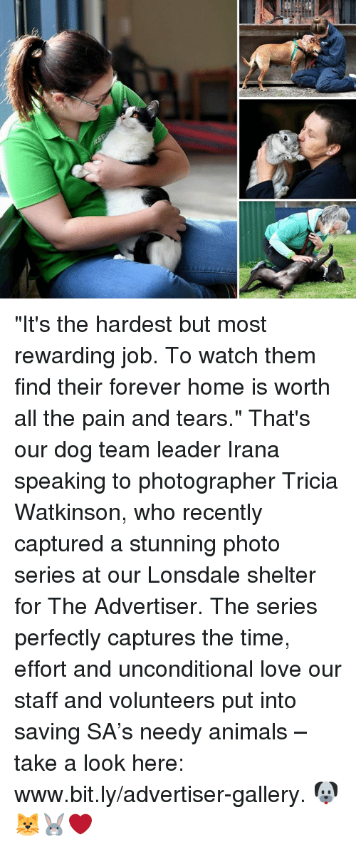 "Animals, Love, and Memes: ""It's the hardest but most rewarding job. To watch them find their forever home is worth all the pain and tears."" That's our dog team leader Irana speaking to photographer Tricia Watkinson, who recently captured a stunning photo series at our Lonsdale shelter for The Advertiser. The series perfectly captures the time, effort and unconditional love our staff and volunteers put into saving SA's needy animals – take a look here: www.bit.ly/advertiser-gallery. 🐶🐱🐰❤️"