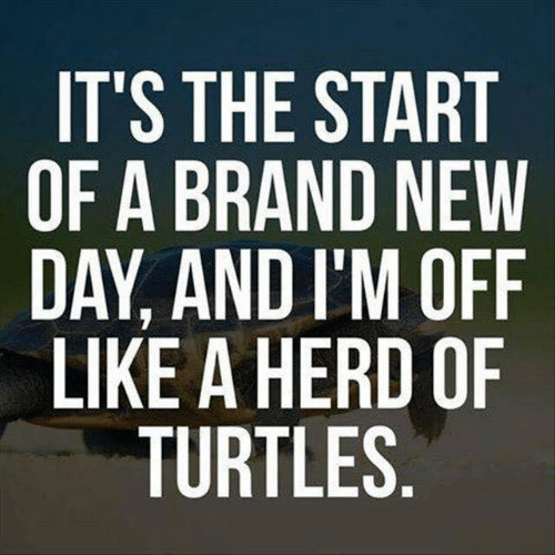 Dank, Brand New, and 🤖: IT'S THE START  OF A BRAND NEW  DAY, AND I'M OFF  LIKE A HERD OF  TURTLES