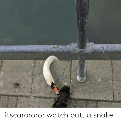 Watch Out: itscarororo: watch out, a snake