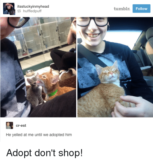 Memes, Shopping, and Tumblr: itsstuckyinmyhead  huffled puff  cr-est  He yelled at me until we adopted him  tumblr.  Follow Adopt don't shop!