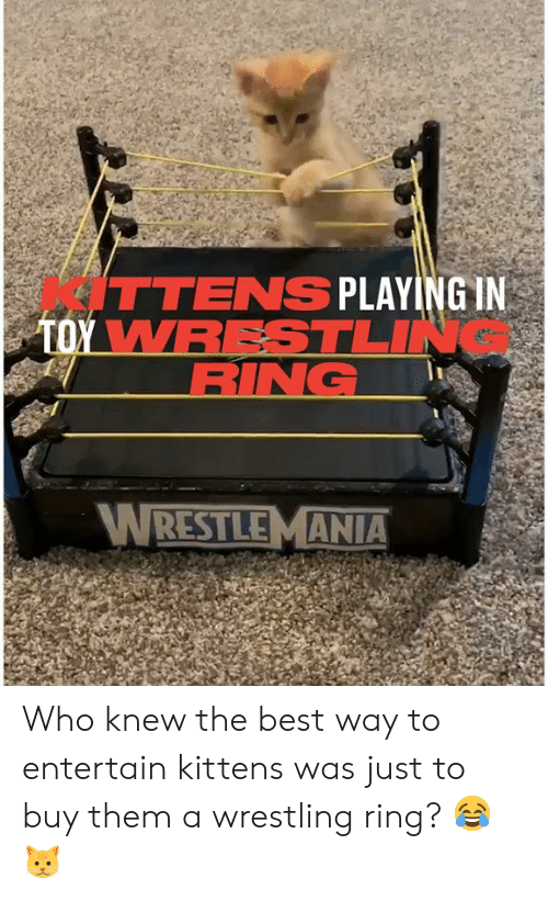 Dank, Wrestling, and Wrestlemania: ITTENS PLAYING IN  TOY WRESTLIN  RING  WRESTLEMANIA Who knew the best way to entertain kittens was just to buy them a wrestling ring? 😂🐱