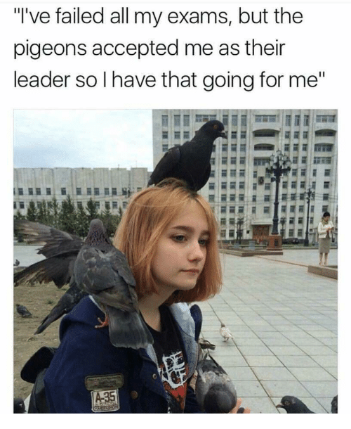 "Accepted, All, and For: ""I've failed all my exams, but the  pigeons accepted me as their  leader so Ihave that going for me"""