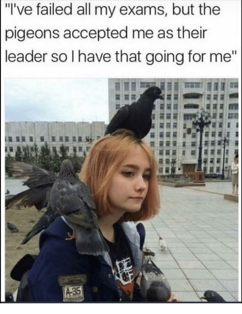 """Funny, Accepted, and All: """"I've failed all my exams, but the  pigeons accepted me as thein  leader so I have that going for me""""  A35"""