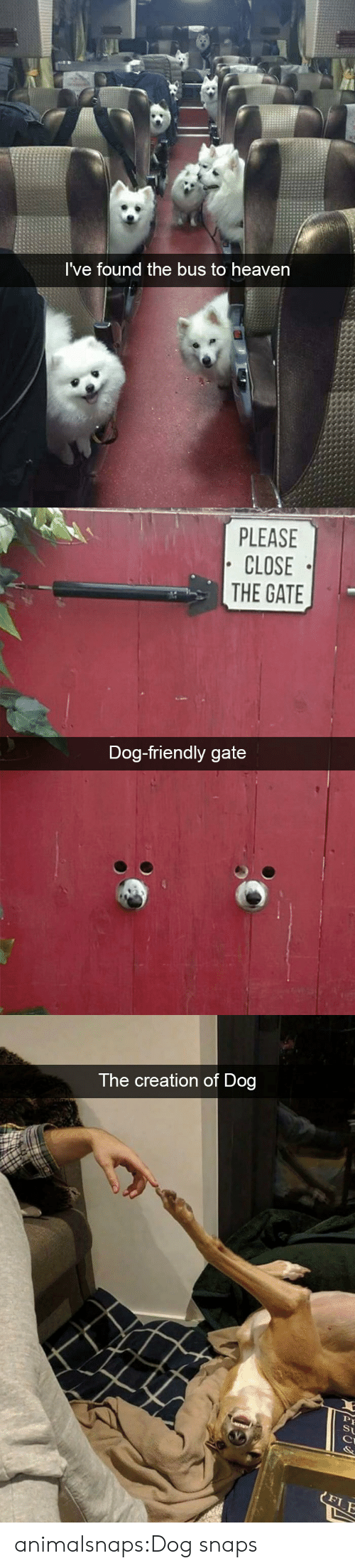 gate: I've found the bus to heaven   PLEASE  CLOSE  THE GATE  Dog-friendly gate   The creation of Dog  St  FLE animalsnaps:Dog snaps