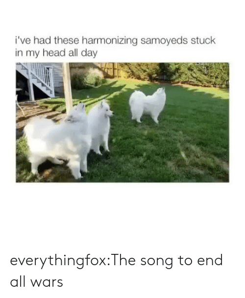 Head, Target, and Tumblr: i've had these harmonizing samoyeds stuck  in my head all day everythingfox:The song to end all wars