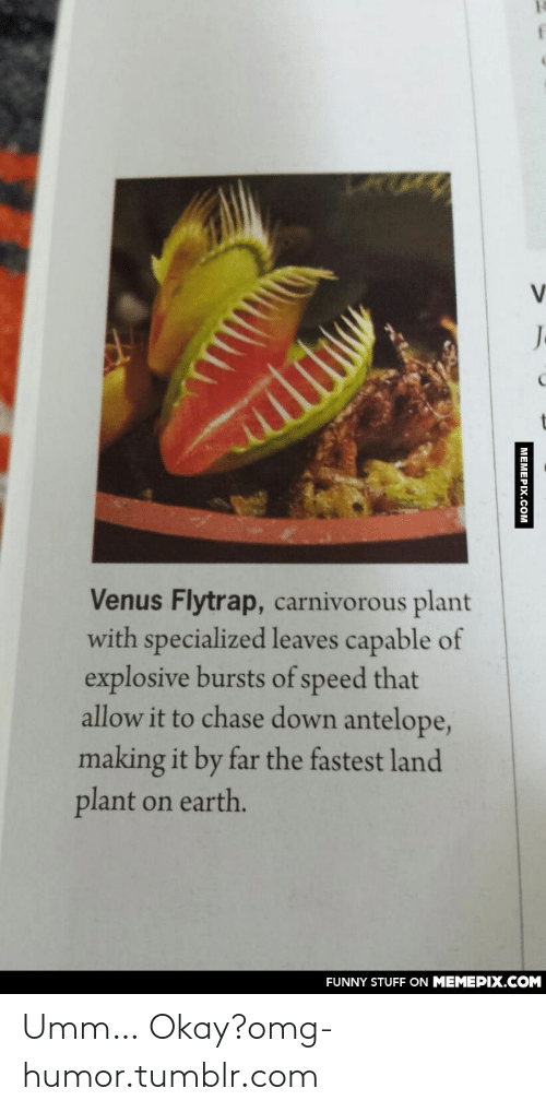 carnivorous: J.  Venus Flytrap, carnivorous plant  with specialized leaves capable of  explosive bursts of speed that  allow it to chase down antelope,  making it by far the fastest land  plant on earth.  FUNNY STUFF ON MEMEPIX.COM  MEMEPIX.COM Umm… Okay?omg-humor.tumblr.com
