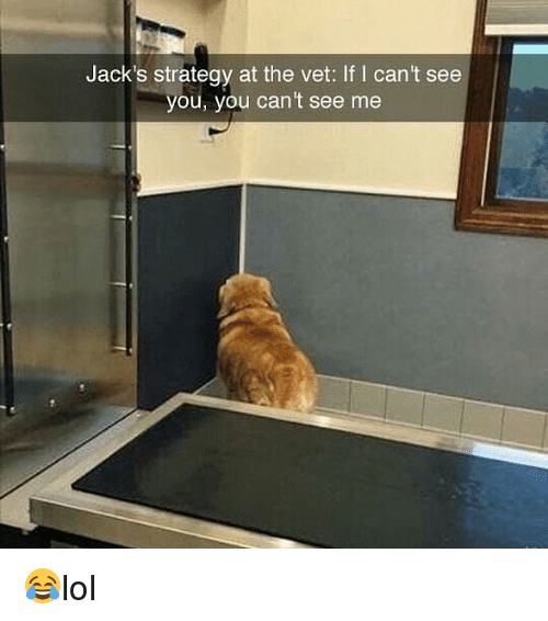 vetting: Jack's strategy at the vet: If I cant see  you, you can't see me 😂lol