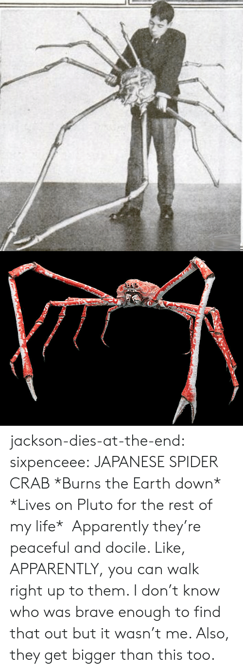 Bigger Than: jackson-dies-at-the-end: sixpenceee:  JAPANESE SPIDER CRAB *Burns the Earth down* *Lives on Pluto for the rest of my life*    Apparently they're peaceful and docile. Like, APPARENTLY, you can walk right up to them. I don't know who was brave enough to find that out but it wasn't me.  Also, they get bigger than this too.