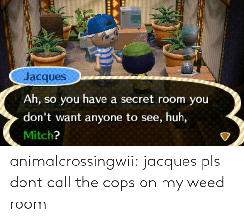 Have A Secret: Jacques  Ah, so you have a secret room you  don't want anyone to see, huh,  Mitch animalcrossingwii:  jacques pls dont call the cops on my weed room