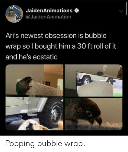 Him, Bubble Wrap, and Obsession: JaidenAnimations  @JaidenAnimation  Ari's newest obsession is bubble  wrap so I bought him a 30 ft roll of it  and he's ecstatic Popping bubble wrap.