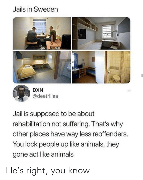 Animals, Jail, and Sweden: Jails in Sweden  DXN  @deetrillaa  Jail is supposed to be about  rehabilitation not suffering. That's why  other places have way less reoffenders.  You lock people up like animals, they  gone act like animals He's right, you know