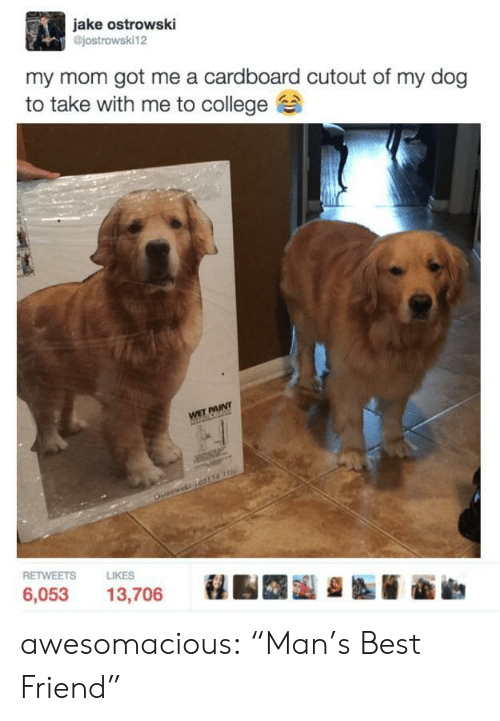 "cardboard: jake ostrowski  @jostrowski12  my mom got me a cardboard cutout of my dog  to take with me to college  RETWEETS  LIKES  6,053 13,706 awesomacious:  ""Man's Best Friend"""