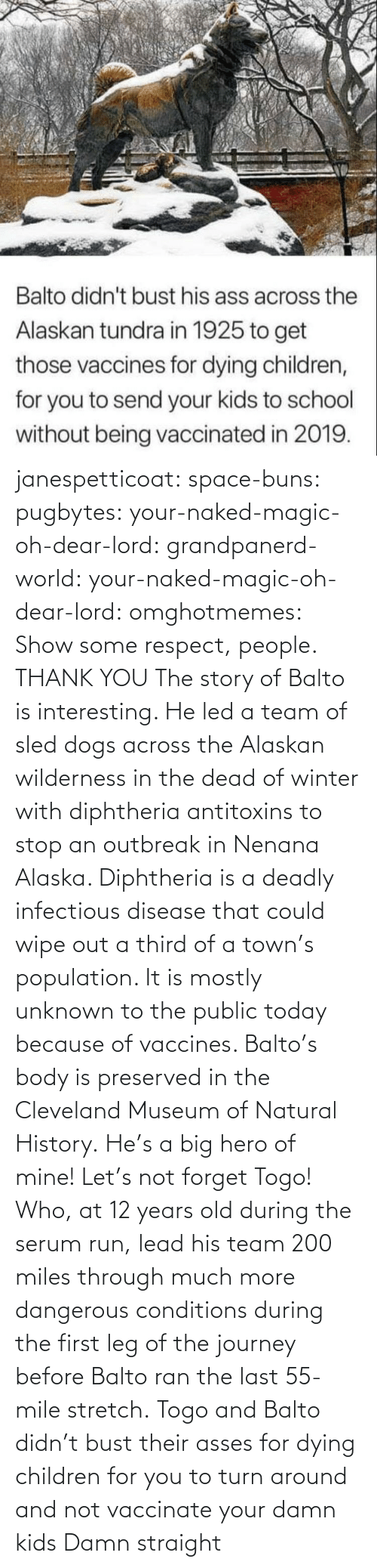 Miles: janespetticoat: space-buns:  pugbytes:   your-naked-magic-oh-dear-lord:  grandpanerd-world:   your-naked-magic-oh-dear-lord:  omghotmemes: Show some respect, people.  THANK YOU   The story of Balto is interesting. He led a team of sled dogs across the Alaskan wilderness in the dead of winter with diphtheria antitoxins to stop an outbreak in Nenana Alaska. Diphtheria is a deadly infectious disease that could wipe out a third of a town's population. It is mostly unknown to the public today because of vaccines. Balto's body is preserved in the Cleveland Museum of Natural History.   He's a big hero of mine!   Let's not forget Togo! Who, at 12 years old during the serum run, lead his team 200 miles through much more dangerous conditions during the first leg of the journey before Balto ran the last 55-mile stretch.   Togo and Balto didn't bust their asses for dying children for you to turn around and not vaccinate your damn kids    Damn straight