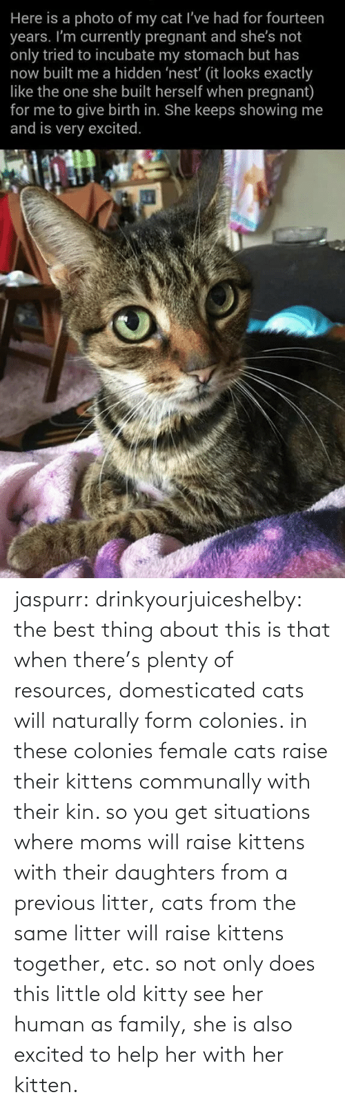 human: jaspurr:  drinkyourjuiceshelby:    the best thing about this is that when there's plenty of resources, domesticated cats will naturally form colonies. in these colonies female cats raise their kittens communally with their kin. so you get situations where moms will raise kittens with their daughters from a previous litter, cats from the same litter will raise kittens together, etc. so not only does this little old kitty see her human as family, she is also excited to help her with her kitten.