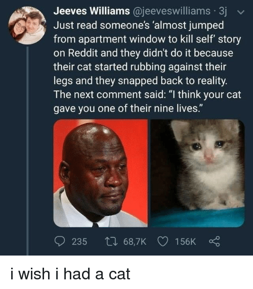 """Reddit, Jumped, and Reality: Jeeves Williams @jeeveswilliams 3j  Just read someone's 'almost jumped  from apartment window to kill self story  on Reddit and they didn't do it because  their cat started rubbing against their  legs and they snapped back to reality.  The next comment said: """"I think your cat  gave you one of their nine lives. i wish i had a cat"""